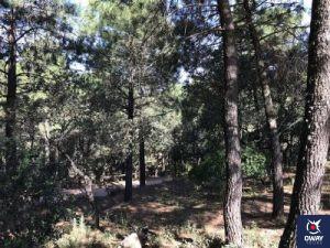 Imagen sombría de árboles