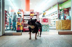Où acheter avec votre animal de compagnie à Ronda?