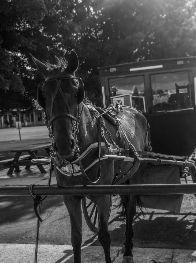 Haced la ruta en coche de caballo