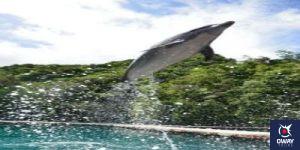 Delfín en Gibraltar