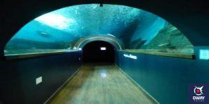 Pasillo del acuario de Sevilla