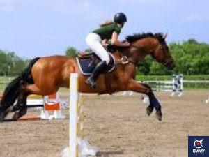 Un jinete realizando un salto con su caballo en Granada