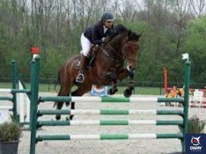 Un jinete realizando un salto vertical con su caballo en Granada