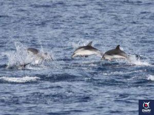 Observation des dauphins dans le détroit de Gibraltar