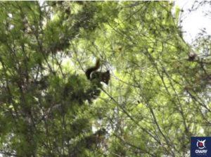 Observation d'écureuils à El Morlaco Málaga