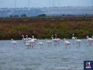 Marismas de Cádiz con su flora y fauna
