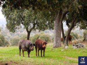 Route des Dehesas et des séchoirs à jambon de Villanueva de Cordoba
