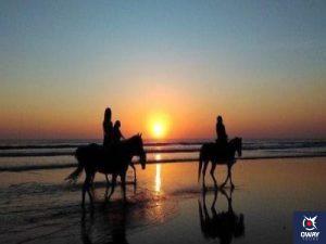 Promenade à cheval le long des plages de Cadix en appréciant le coucher du soleil