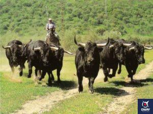 Ruta por fincas históricas del toreo y crianza del caballo andaluz