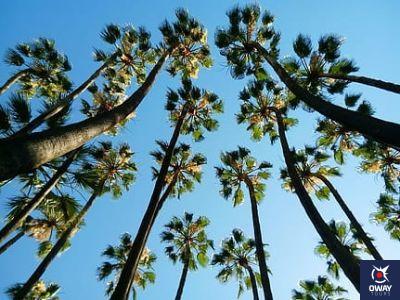 palmeras de Málaga