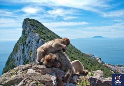 visita monos en gibraltar