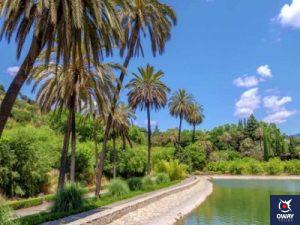 Palmiers dans le jardin botanique de Malaga