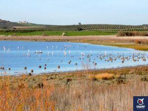 Imagen panoramica de la laguna con flamencos