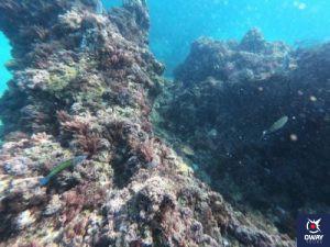 Scuba Diving in the Maro Cliffs in Malaga