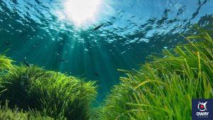 Arrecife barrera de Posidonia 10 monumentos naturales de Andalucia