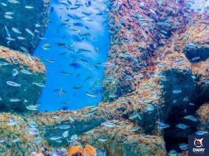 Banco de peces en el Acuario de Sevilla