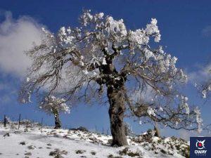 Quejigo en Sierra de las Nieves Málaga