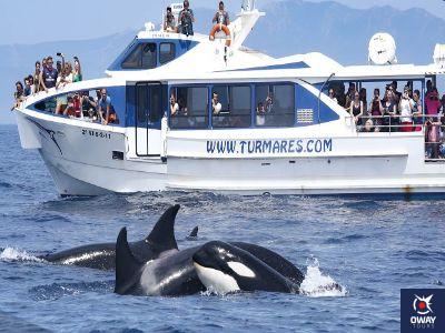 Ballenas y Delfines