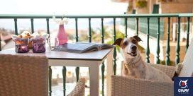 Jerez de la Frontera dispose d'une liste d'hôtels, en fonction du prix ou de l'emplacement, qui autorisent nos animaux de compagnie.